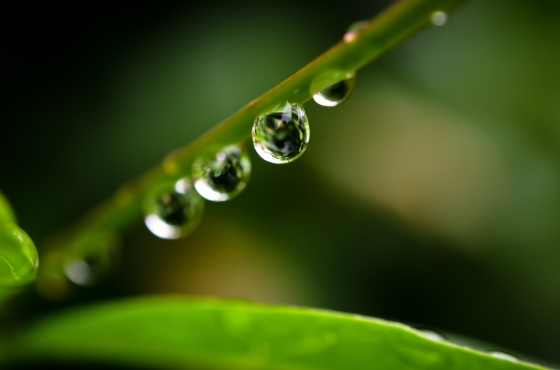 leaf_drops_by_adambettley-d3i1gon