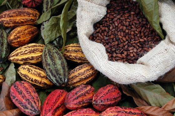Fave-di-Cacao-e-semi